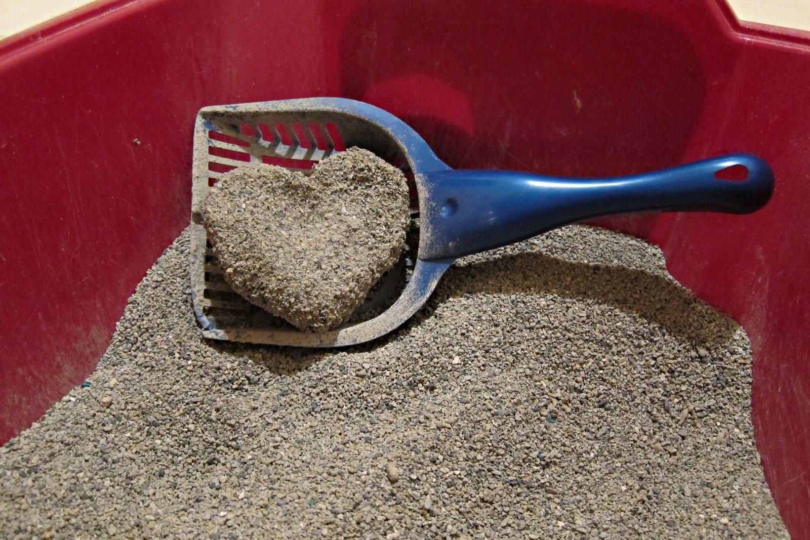 Best Dust Free Cat Litter