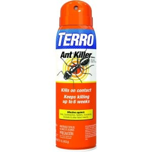 best ant killer