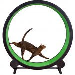 best cat wheel